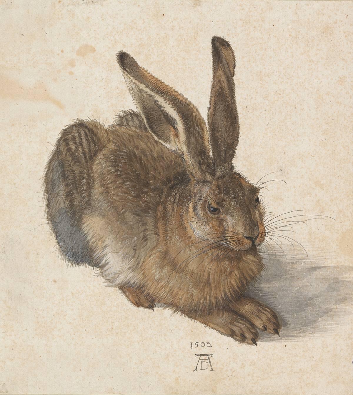 Albrecht Durer: giovane lepre, 1502